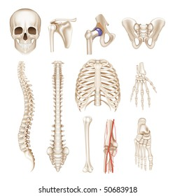 Human bones, vector set