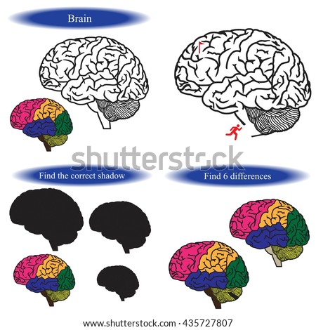 Human Brain Coloring Book Find Differences Stock Vector (Royalty ...