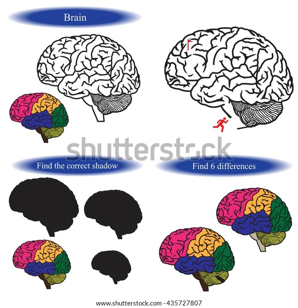 Human Brain Coloring Book Find Differences Stock Vector ...