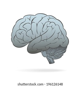 The human brain. Conceptual vector illustration
