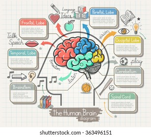 The Human Brain Diagram Doodles Icons Set. Vector Illustration.