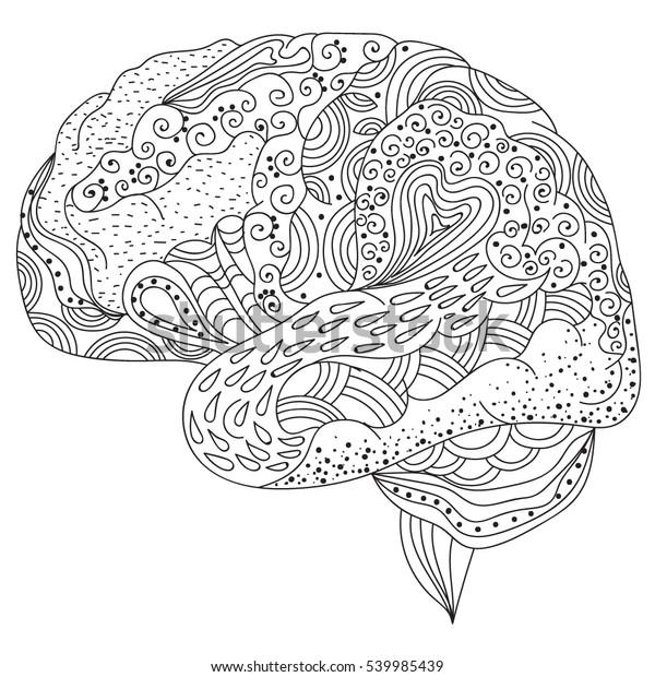 Human Brain Doodle Decorative Curves Creative Stock Vector ...