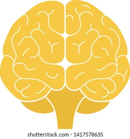 Human brain front view. Vector illustration. Flat design