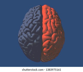 Human brain hemispheres left gray and right orange brain color engraving in top view illustration isolated on deep blue BG