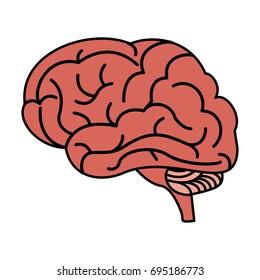human brain icon image