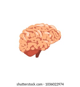 Brain diagram images stock photos vectors shutterstock human brain internal organ anatomy vector illustration on a white background ccuart Image collections