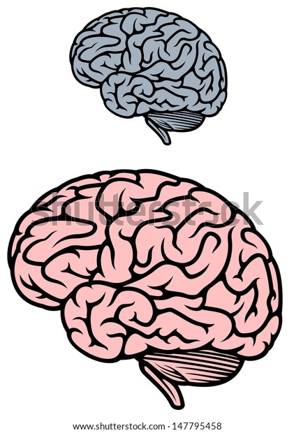 Human brain isolated on white background for medicine design or idea of logo. Jpeg version also available in gallery