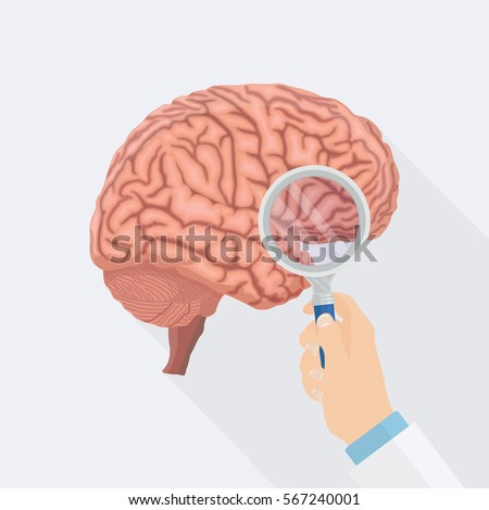 Human Brain Magnifying Glass Isolated On Stock Vector Royalty Free
