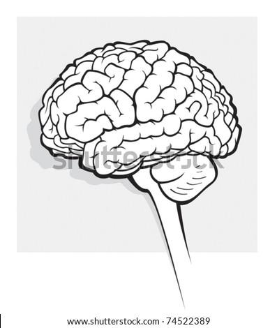 Human Brain Medical Schematic Simplified Illustration Stock Vector