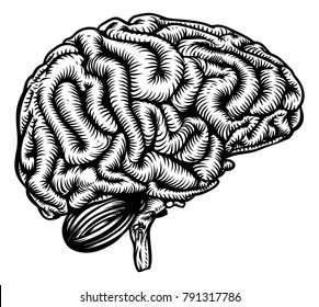 Human brain in profile anatomical drawing in a vintage woodcut etching style