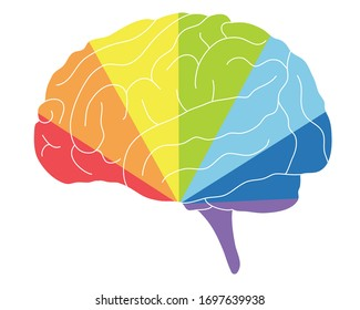 Human brain with rainbow colors sectors and white curves. Colour psychology. Vector illustration.