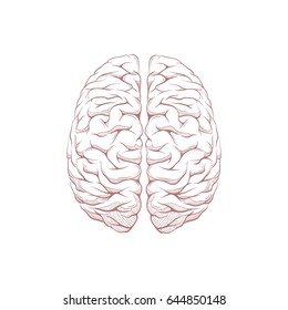 Human brain right and left hemisphere illustration. Hand drawn vector.