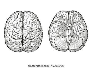 human brain scheme