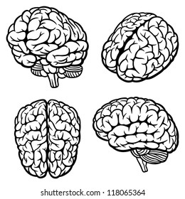 Human Brain. Set of four views. Vector Illustration