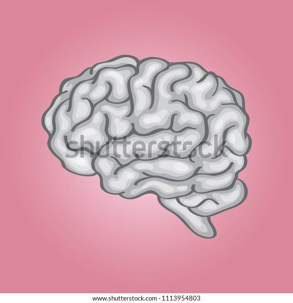 Human Brain Simple Illustration Stock Vector (Royalty Free
