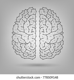 The human brain, structure
