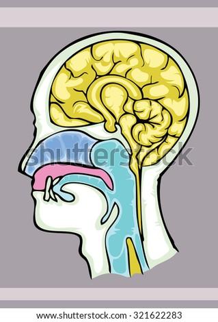 Human Brain Structure Cartoon Hand Draw Stock Vector ...