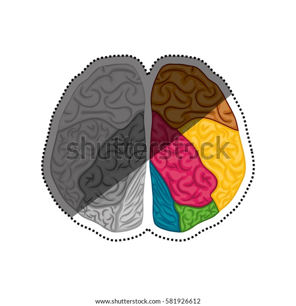 Human brain symbol icon vector illustration graphic design