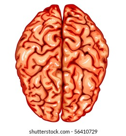 Head brain diagram images stock photos vectors shutterstock human brain top view ccuart Choice Image