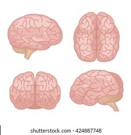Human brain. Vector flat cartoon set