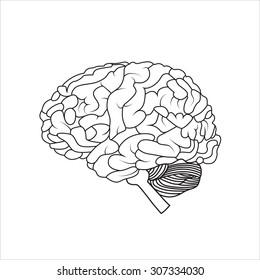 Human brain, vector illustration
