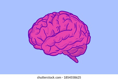 Human brain vector illustration - Pink beautiful detailed brain on blue background.