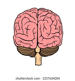 Human Brain vector illustration with rear view  isolated on background