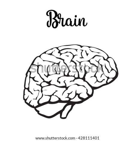 Human Brain Vector Illustration Sketch Brain Stock Vector Royalty