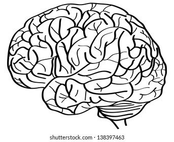 Human Brain Vector Outline Sketched Up, Vector Illustration EPS 10.