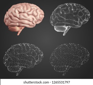 human brain. Vector set in different styles. mesh