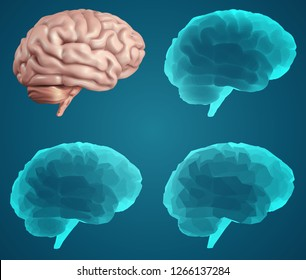 human brain. Vector set in different styles. meshe
