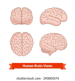 Human brain views. Top, frontal, side, three-quarter. Flat vector icons.