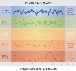 Human Brain Waves Diagram in five Colors