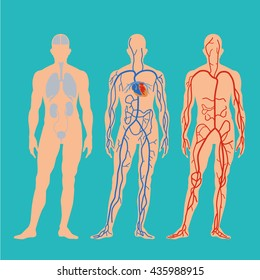 human circulatory system flat vector animation character bodies silhouette