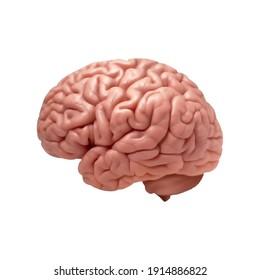 menschliches, farbiges Gehirn mit Kopienraum für Ihren Text oder Ihre Bilder.Vektorgrafik EPS10