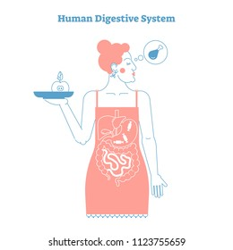 Human Digestive System anatomical line style artistic vector illustration, medical education cross section poster with food diet choices and stylized inner digestive female organs