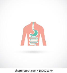 Human digestive system - vector illustration