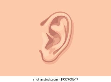 Human ear closeup. Design template of body part.
