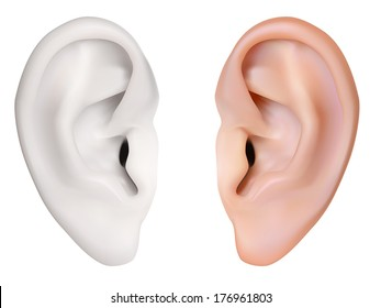 Human Ear. Vector illustration