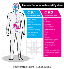 human endocannabinoid CB1 and CB2 Receptors target system active in human body.