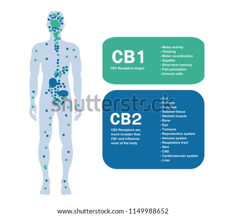 Cannabinoid Receptors and the Endocannabinoid System