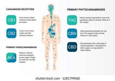 human endocannabinoid system cannabinoid receptors is infographic backgrounds.