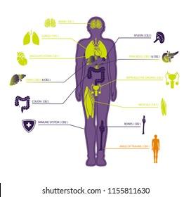 human endocannabinoid system with CBD1 & CBD2