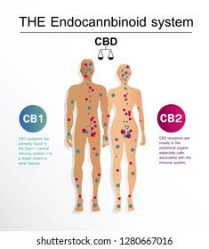 the human endocannbinoid system