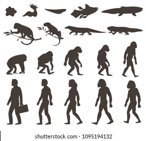 Human evolution darwin theory set of silhouettes of amphibian, reptile, primates and modern person isolated vector illustration