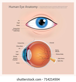 human eye anatomy images stock photos vectors shutterstock