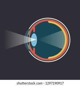 Human eye dissection infograpgic scheme