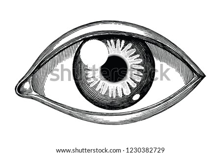 human eye reference hand draw vintage stock vector royalty free