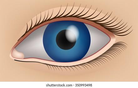 Human eye, sight