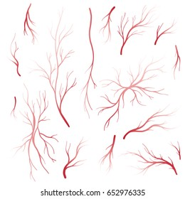 Human eye veins and arteries, red blood vessels. Blood-vascular system vector set isolated on white background. Tattoo sticker collection